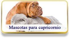 Mascotas para Capricornio