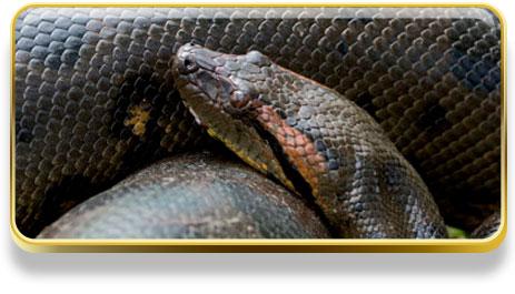 Que significa soñar con anaconda