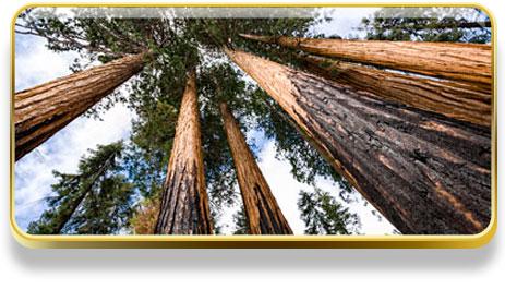 ¿Qué significa soñar con árboles?