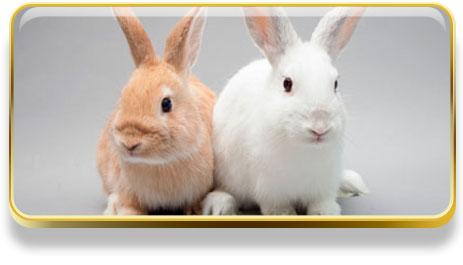 Que significa soñar con conejos