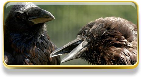 Que significa soñar con cuervos