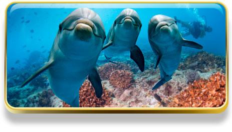 ¿Qué significa soñar con delfines?