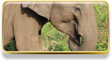 Qué Significa Soñar Con Elefantes Significado De Los Sueños