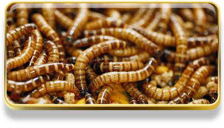 ¿Qué significa soñar con gusanos?
