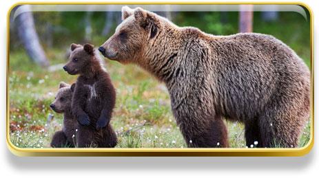 Que significa soñar con osos