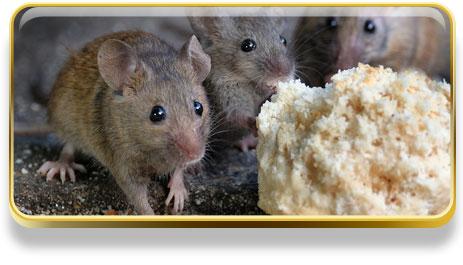 Que significa soñar con ratones