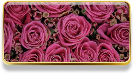 Que significa soñar con rosas
